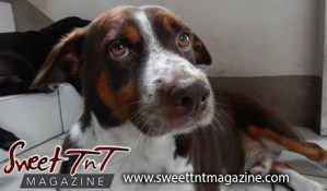 Man's best friend, Brown and white dog by Candida Khan for fireworks article in sweet T&T for Sweet TnT Magazine, Culturama Publishing Company, for news in Trinidad, in Port of Spain, Trinidad and Tobago, with positive how to photography.