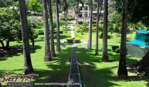 Tall trees neatly forming an archway the Scarborough Botanical Gardens in Tobago in sweet T&T for Sweet TnT Magazine, Culturama Publishing Company, for news in Trinidad, in Port of Spain, Trinidad and Tobago, with positive how to photography.
