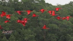 Caroni Bird Sanctuary