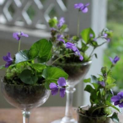 DIY: Wild Violet Centerpieces
