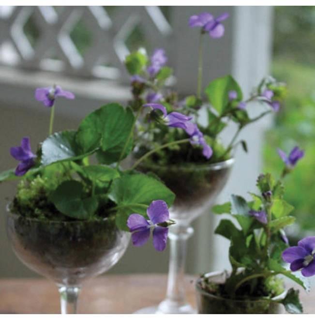 wild violet centerpieces