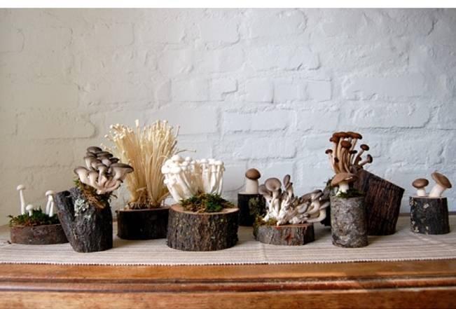 rustic mushroom centerpieces