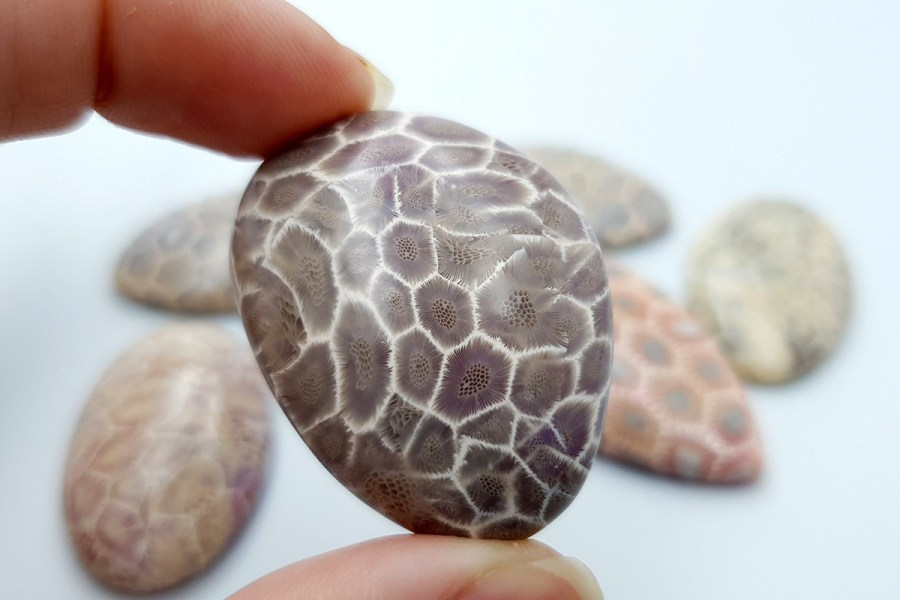 Petoskey Stone Set 01 p13