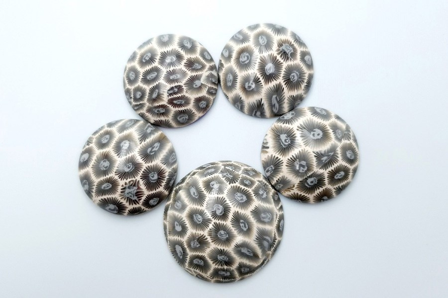 Petoskey Stone Set 02 p01