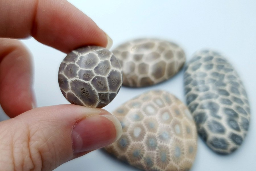 Petoskey Stone Set 03 p04
