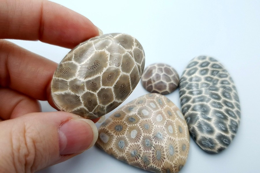 Petoskey Stone Set 03 p05