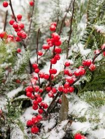 Amazing Winter Garden Landscape 50