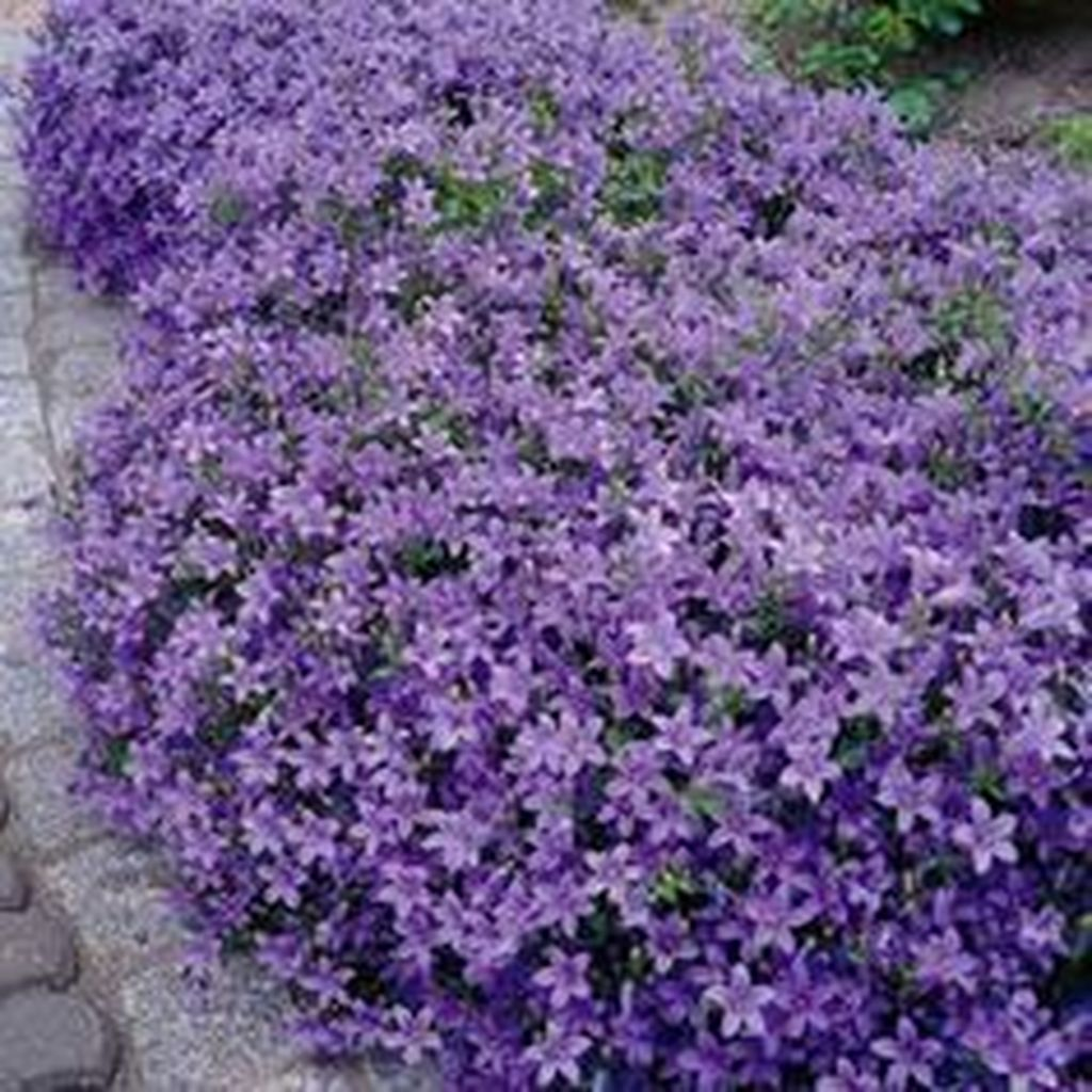 Lovely Flower Beds Design Ideas In Front Of House 09