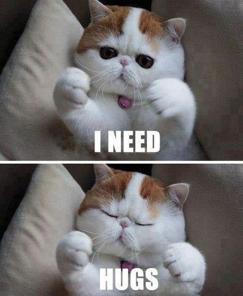 29 thick white cat and hugs?resize=500%2C608 love memes, funny i love you memes for her and him,Love Memes For Him