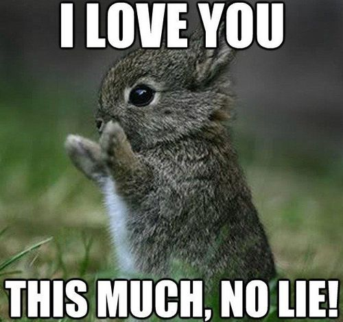 tiny rabbit and a declaration of love