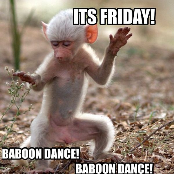 Its friday baboon dance