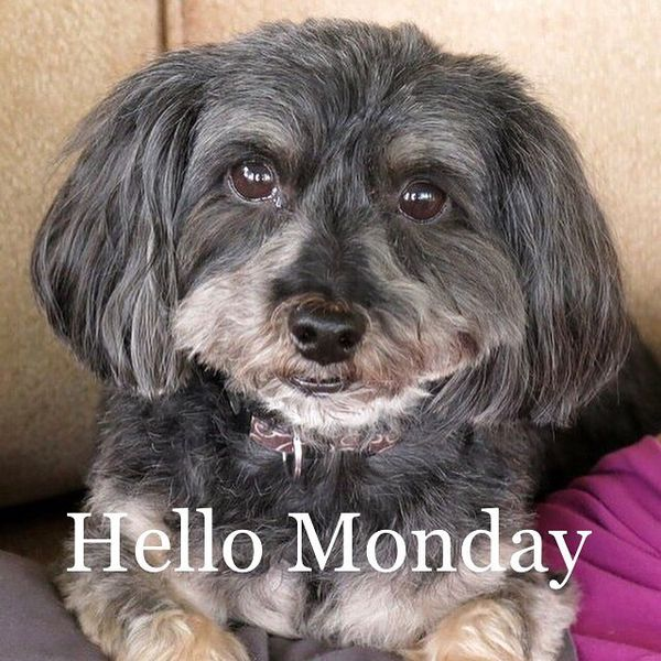hello monday dog