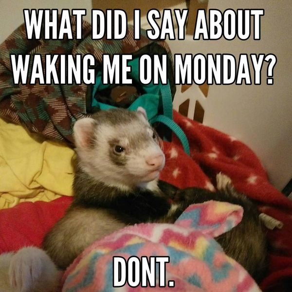what did i say about waking me on monday