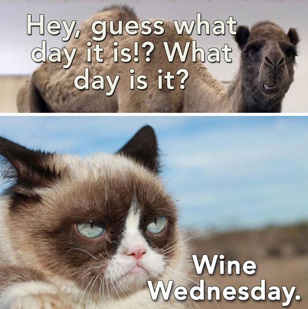Funny Happy Wednesday Pictures