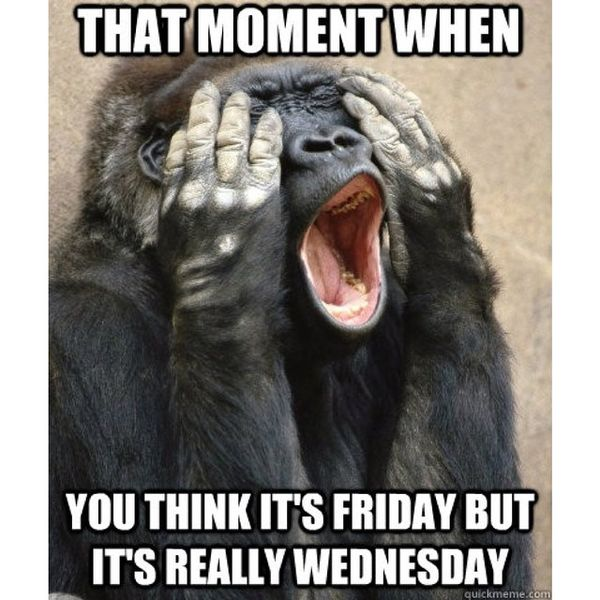 cool memes about wednesday
