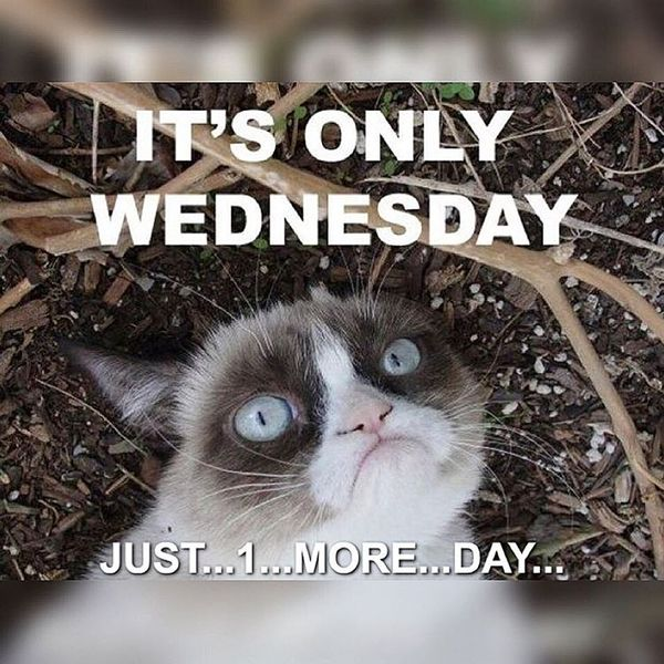 Quotes Funny Day Hump Wednesday