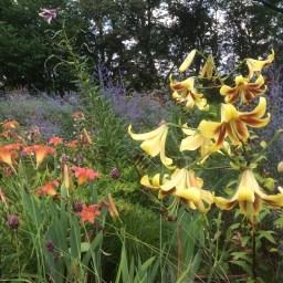 Lilien im egapark – facettenreich und in voller Blüte