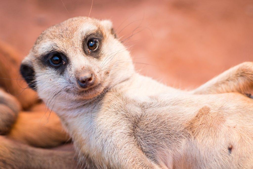 ThŸringer Zoopark , Tierpflegerin Sabine Fu§