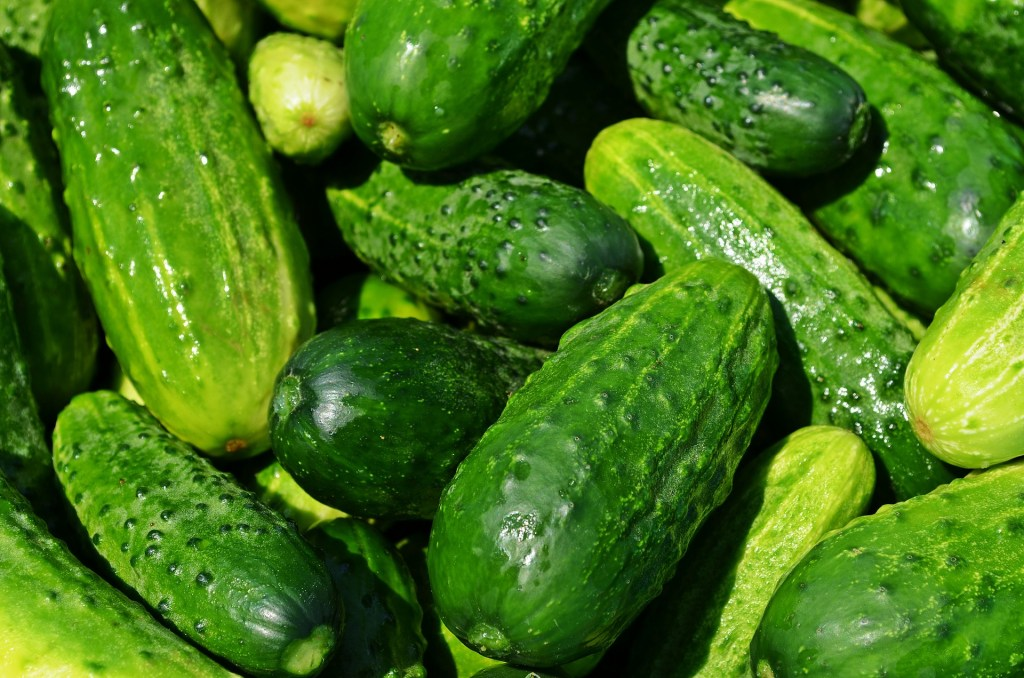 cucumbers-849269_1920