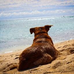 Ab in den Urlaub – Reisetipps für Vierbeiner