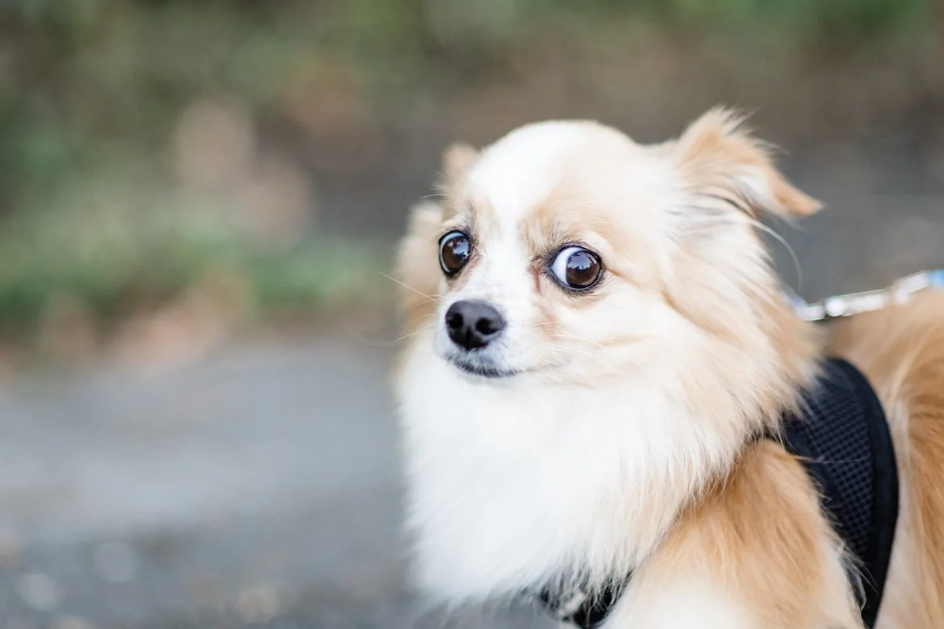 skeptical look on dogs face