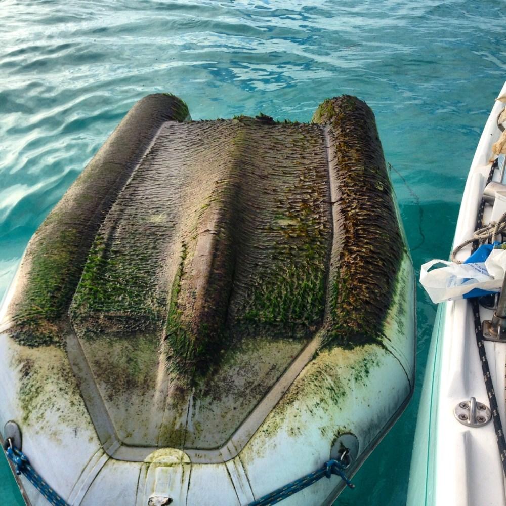 Algae scrubbing makes for great procrastination.