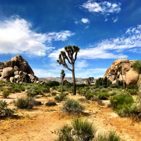 """In God's Country"" in Joshua Tree National Park"