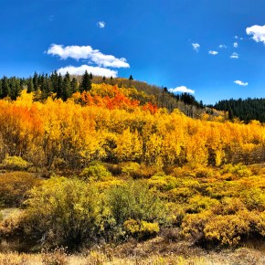 Leaf Peeping in Breckenridge & Frisco