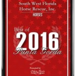 2016 - Best of Award in Punta Gorda, FL (Horse Category)