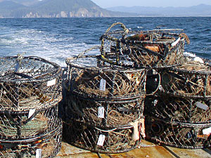 California Commercial Rock Crab Fishery Extends to Bodega Bay