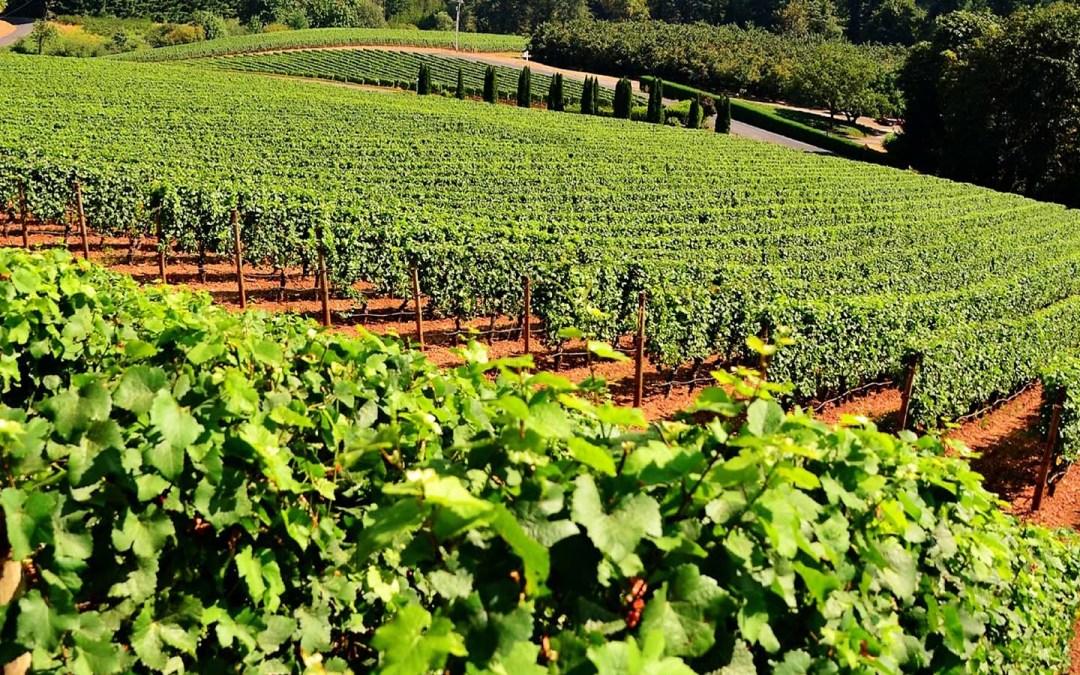 Vineyard Visit for September