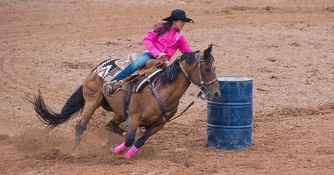 Equine Herpes Myeloencephalopathy Confirmed in Lubbock County Horse