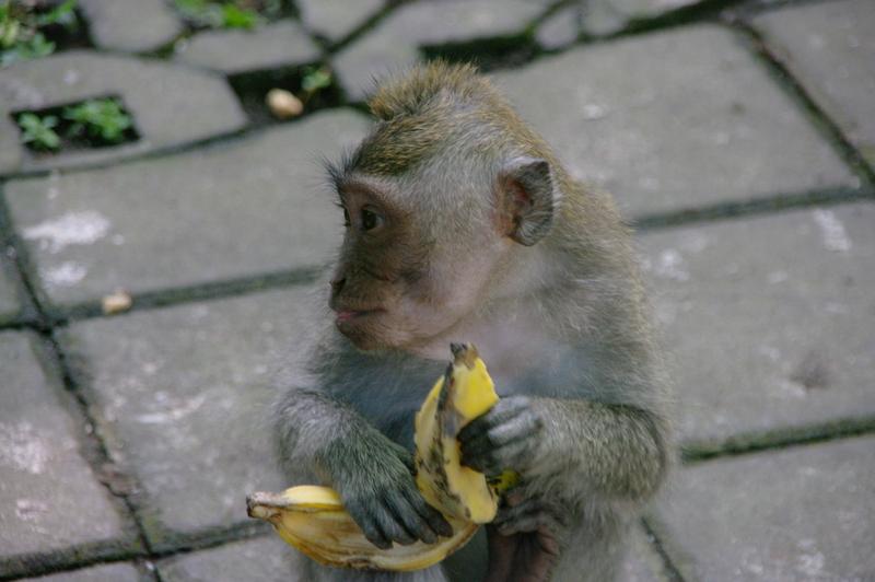 imgp0031 - Indonezja, cz. II Bali, Ubud