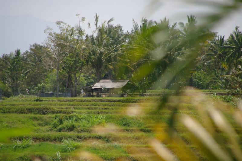 imgp0116 - Ubud na Bali - kulturowa stolica Bali