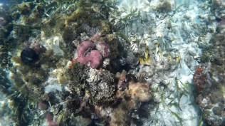 snorkelling4 - Kolumbia - Cartagena de Indias, Isla Mucura