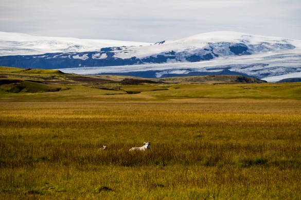 20180909  9090916 - Co oferuje Islandia?