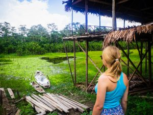 20181104  B040928 300x225 - Amazońska dżungla w Peru
