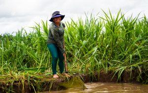 20181106  B061584 300x188 - Amazońska dżungla w Peru