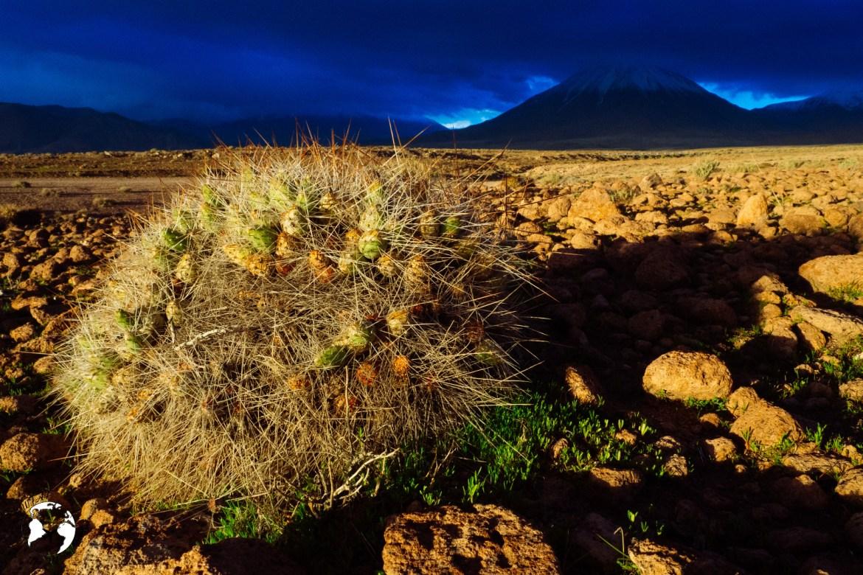 WhatsApp Image 2019 05 28 at 12.39.43 1 - Pustynia Atacama - gotowy plan i koszty podróży