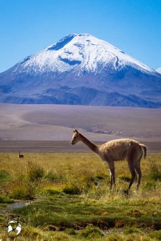 WhatsApp Image 2019 05 28 at 12.42.49 2 - Jak zaplanować wyjazd na pustynię Atacama?