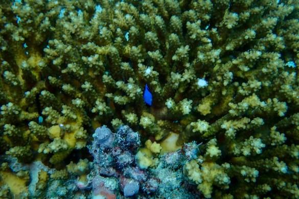 Wielka Rafa Koralowa4 - Cairns - co zwiedzić i czym się zachwycić?