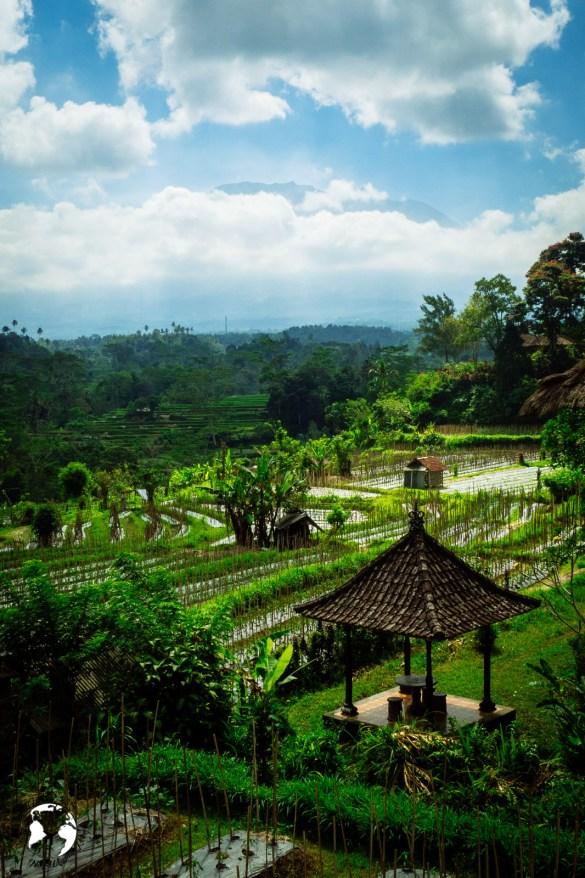 WhatsApp Image 2019 08 16 at 13.40.00 - Bali - gdzie pojechać, żeby się nie rozczarować?