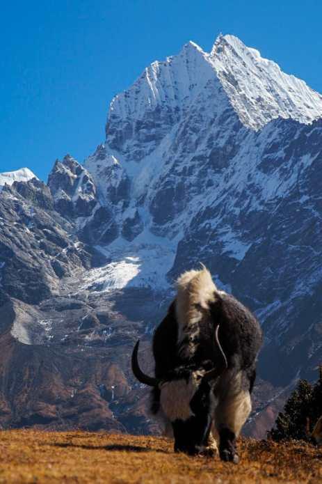 WhatsApp Image 2019 11 26 at 21.23.18 9 - Jak się przygotować w Himalaje?