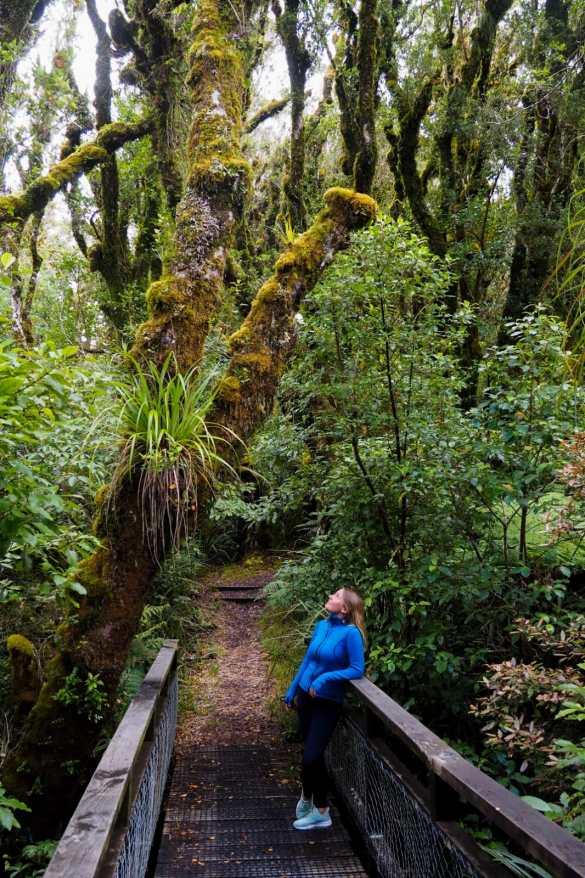 Kamahi walk NZ - 3 tygodnie w Nowej Zelandii - plan trasy