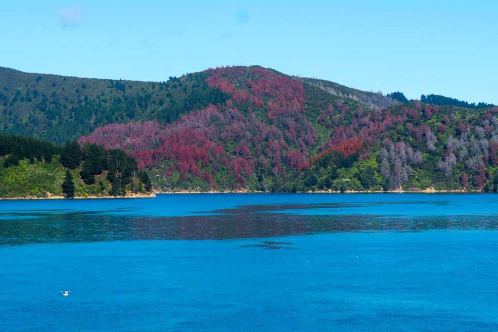 Picton - 3 tygodnie w Nowej Zelandii - plan trasy