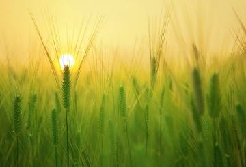 ekologiczne rolnictwo