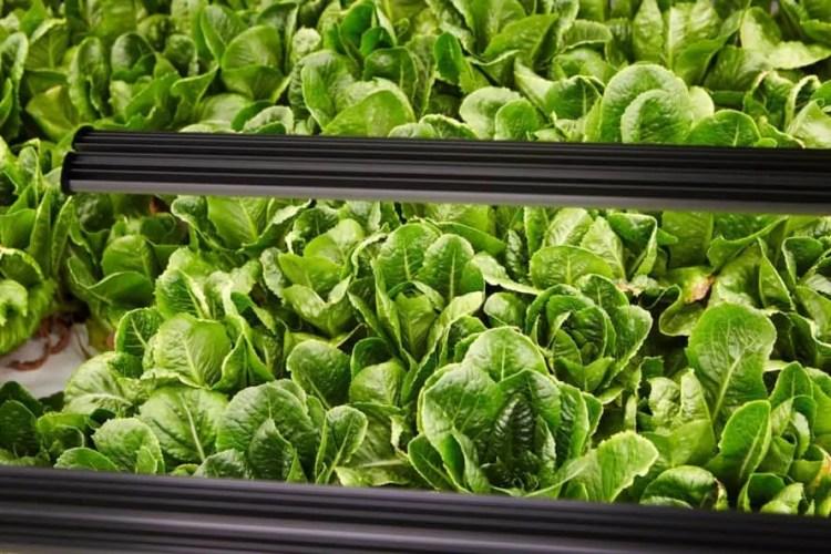 Bowery, leafy greens, produce, food, indoor farm, vertical farm