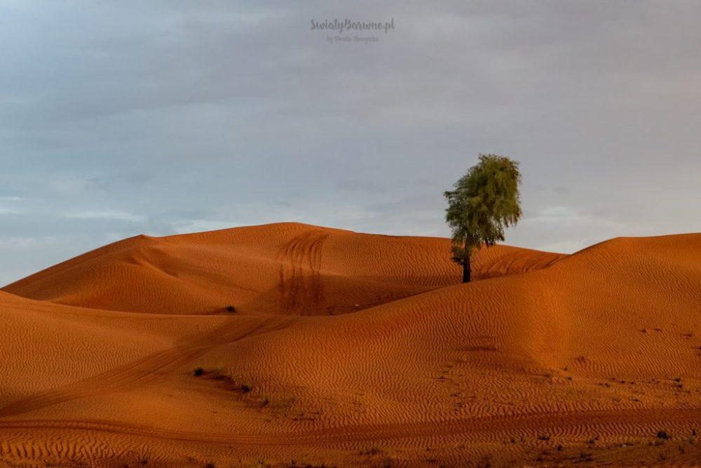 Desert Safari w Dubaju