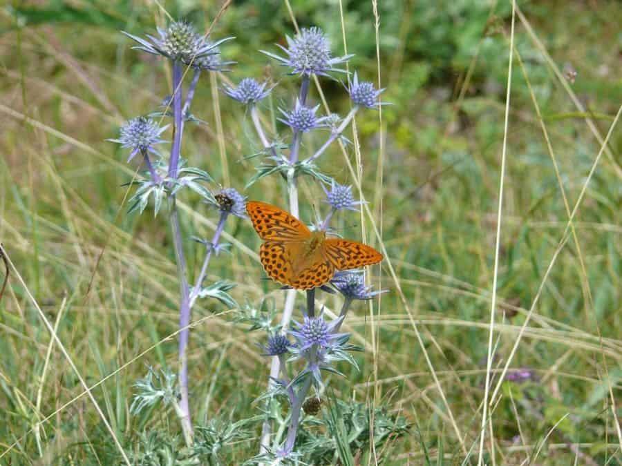 Butterfly on thistle - Snel en duurzaam resultaat