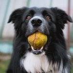 Dog w/ Ball - Sales e-Contracts